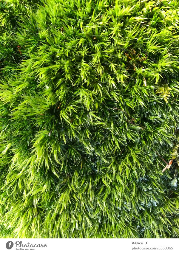 Moss forest floor close up Environment Nature Plant Earth Forest Authentic Fresh Wet Natural Soft Green Design Climate Pure Environmental protection