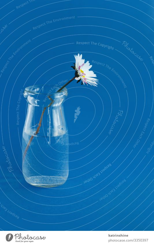 Spring composition with daisy in a glass jar Design Decoration Wedding Woman Adults Mother Flower Blue White Creativity water romantic classic blue