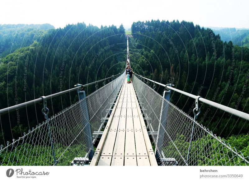 Long is the way and arduous... Suspension bridge vulture layer Landscape Nature Forest Adventure Dangerous Fear of heights wide Fantastic Germany trees Height