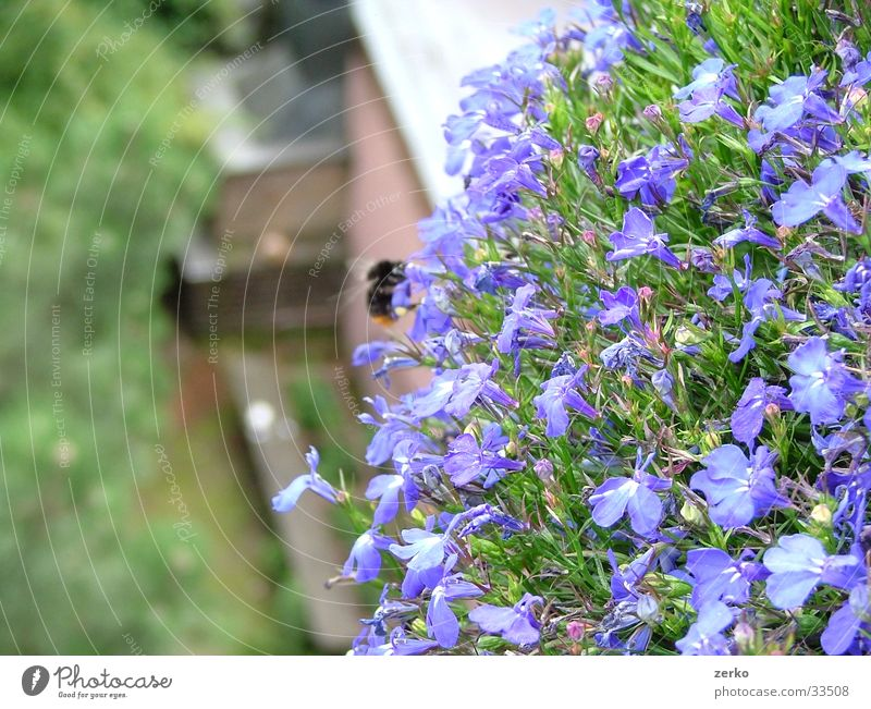Flower Blue Bench Violet Bee Balcony Depth of field Barbecue (apparatus) Bumble bee Focal point