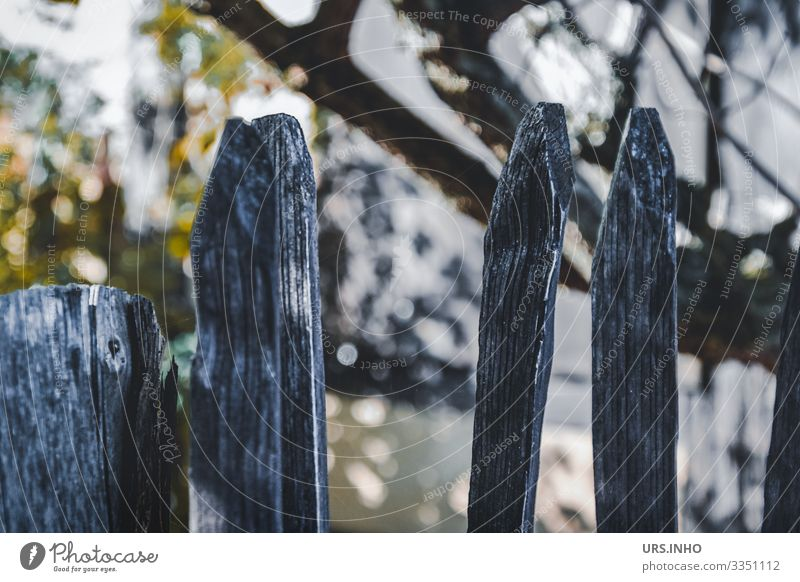 wooden fence in front of the garden Garden Tree Fence Fence post Wooden fence Old Point Yellow Gray Green Idyll Reflection Branch Garden fence Colour photo