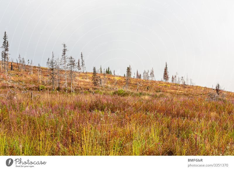 New life - heath landscape that was created after a forest fire Hiking Environment Nature Landscape Plant Earth Autumn Climate Climate change Weather