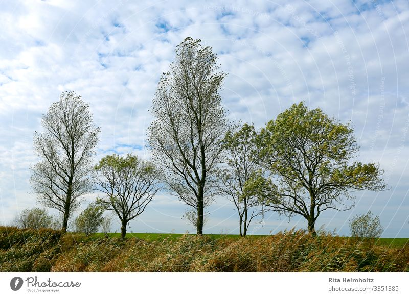 tree row Environment Nature Landscape Plant Sky Clouds Spring Beautiful weather Tree Meadow Growth Fresh Infinity Blue Brown Green White Patient Calm