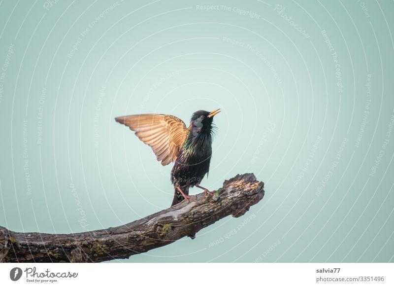 Sky Nature Plant Tree Animal Environment Spring Exceptional Bird Air Wild animal Beautiful weather Dance Wing Advertising Beak