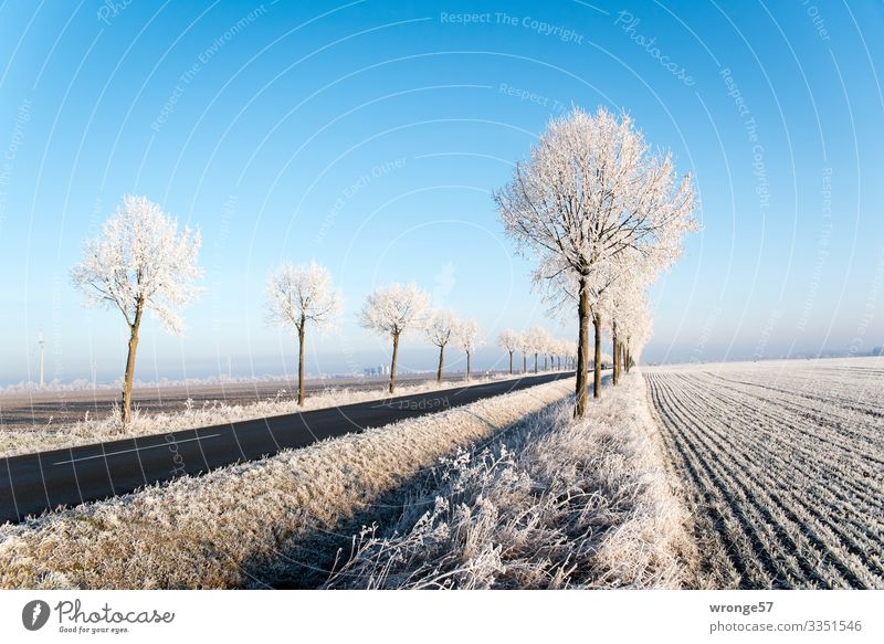 Plant Blue White Landscape Tree Winter Street Cold Brown Ice Field Beautiful weather Frost Cloudless sky Depth of field Traffic infrastructure