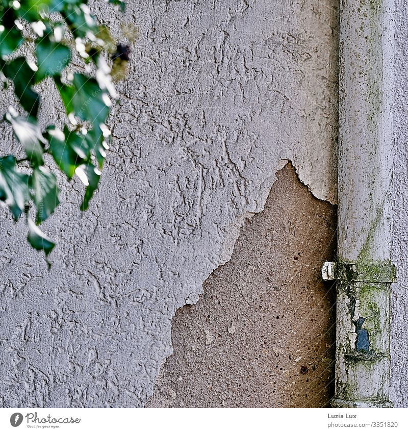 Rain gutter and crumbling plaster Small Town House (Residential Structure) Wall (barrier) Wall (building) Eaves Ivy Leaf Plaster Old Broken Derelict Patina