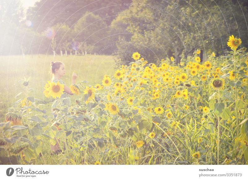 girls in a field of sunflowers Child Field Sunflowers Sunlight Yellow Landscape Meadow Summer Nature natural Exterior shot Agriculture Bright bleed
