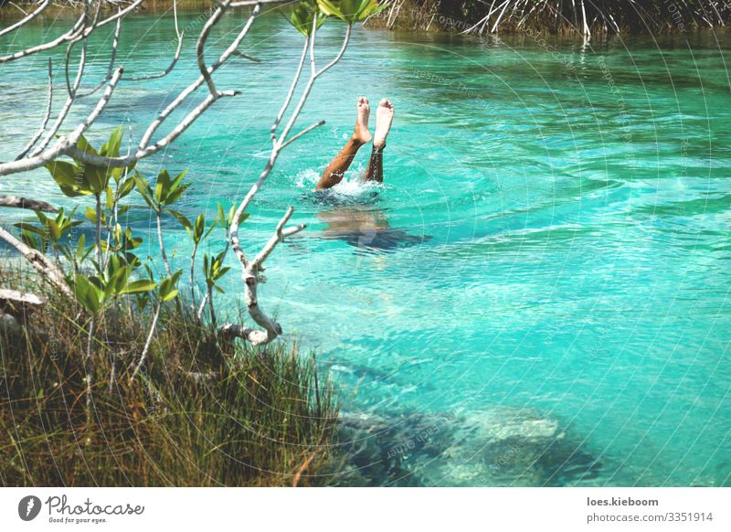 Diving into turquoise in Bacalar, Mexico Relaxation Vacation & Travel Tourism Adventure Far-off places Summer Beach Sports Swimming & Bathing Nature Sun Bushes