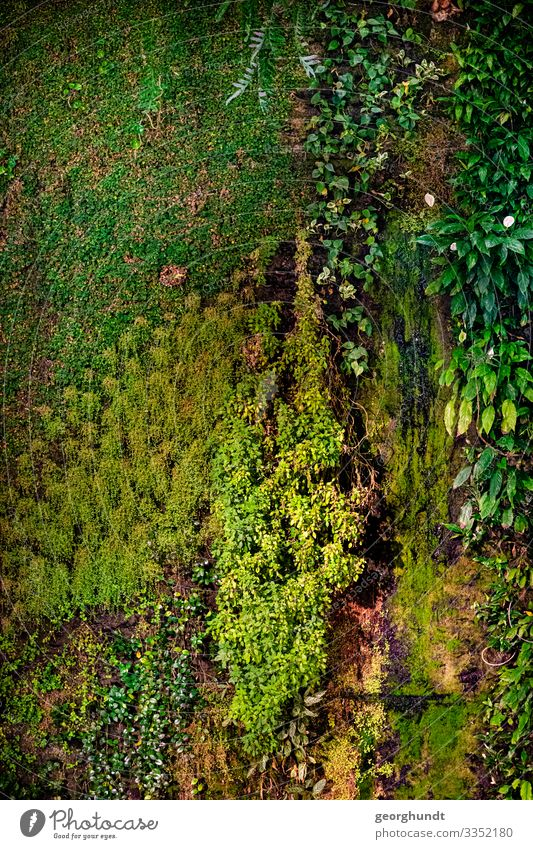 Vertical meadow Environment Nature Plant Climate Climate change Flower Grass Bushes Moss Ivy Fern Leaf Foliage plant Garden Meadow Wall (barrier)