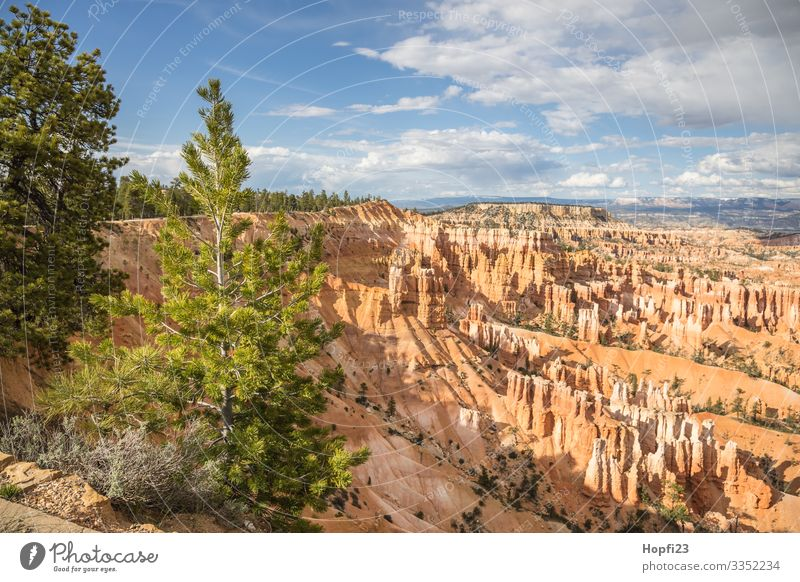 Bryce Canyon Environment Nature Landscape Plant Animal Elements Sky Clouds Sun Spring Summer Beautiful weather Tree Rock Mountain Observe Fitness To enjoy