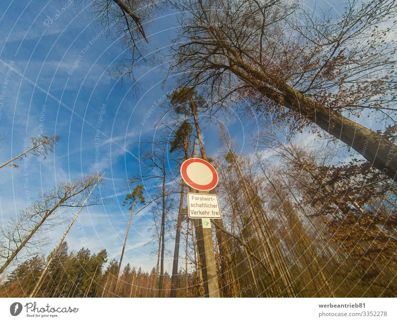 German ONLY FORESTRY TRAFFIC sign in front of trees Nature Plant Sky Tree Street Testing & Control german Language forestry industry Communication Warning sign