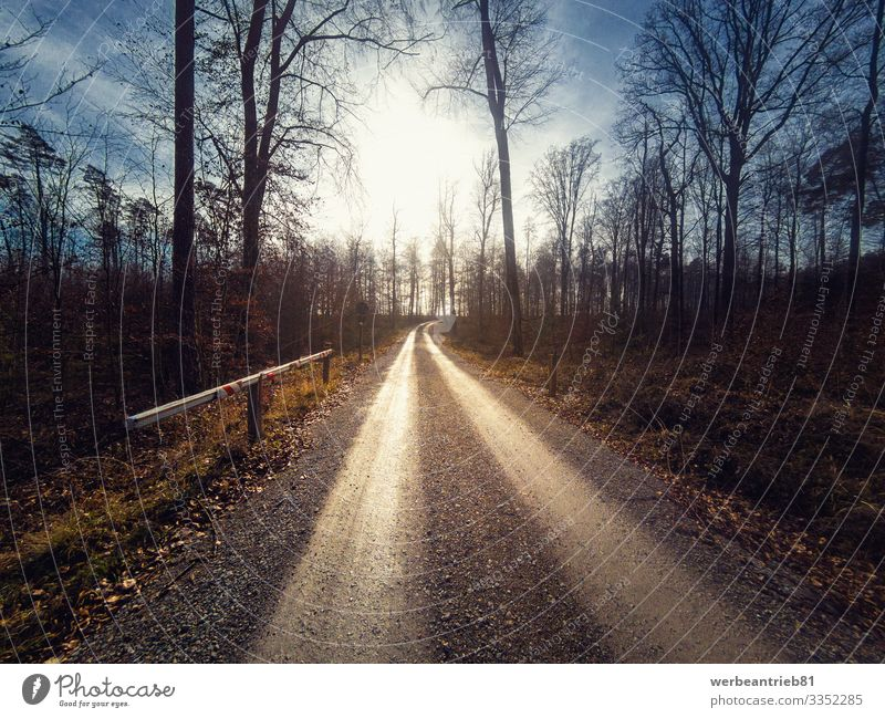 Long forest dirt path leading to the sun Calm Sun Nature Landscape Plant Earth Sky Tree Forest Transport Street Lanes & trails dirt road way sunshine