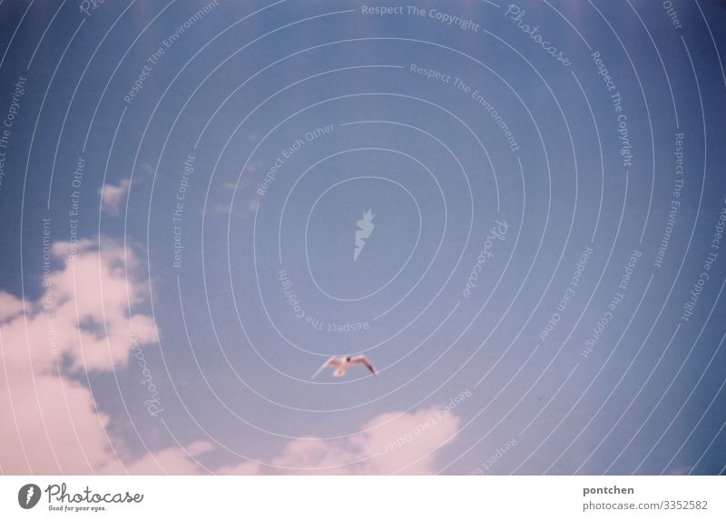Seagull flies in front of a blue sky with clouds Nature Elements Air Sky Clouds Sunlight Summer Animal Wild animal Bird Grand piano Flying Freedom Habitat