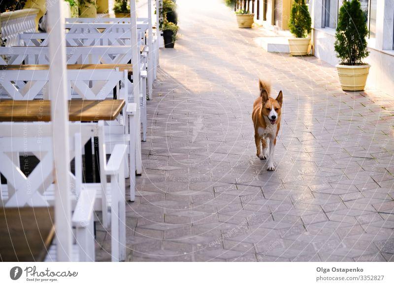 Happy dog on city street. Beautiful background. Animal health Joy Summer Sun Plant Spring Beautiful weather Tree Park Town Terrace Street Pet Dog 1 Walking