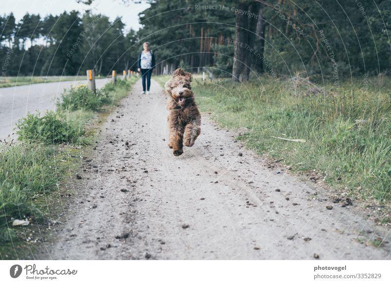 Run Run Baby Human being Feminine Woman Adults 1 45 - 60 years Environment Nature Beautiful weather Grass Forest Animal Pet Dog Movement Infinity Brown Gray