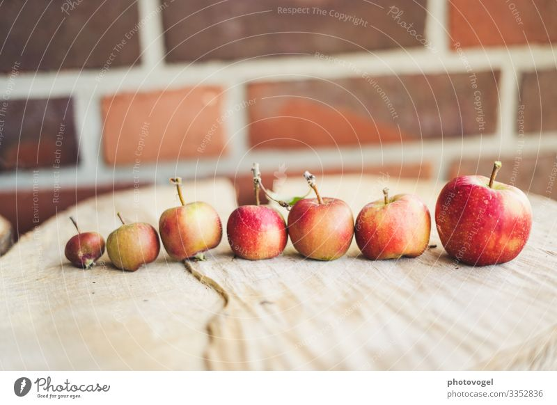 Apples in line Size difference Size comparison large Row apples Apple harvest Red Harvest ready Arrangement Orderliness Healthy