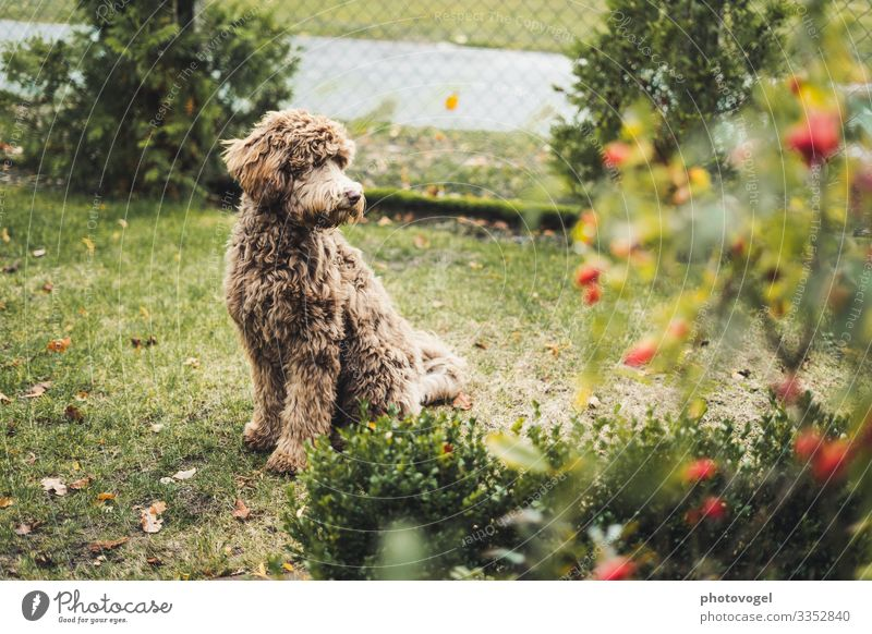 Mrs. Fluffy Environment Nature Plant Beautiful weather Bushes Leaf Blossom Animal Pet Dog 1 Observe Friendliness Happiness Brown Green Emotions Moody Joy Happy