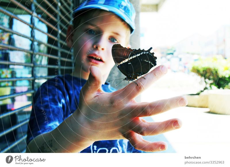 the wonders of this world Costa Rica Butterfly Child Infancy Colour photo Exterior shot Nature Vacation & Travel Adventure Trip Tourism Freedom Wanderlust