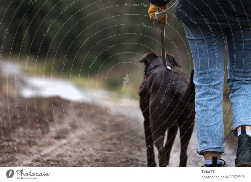 #Walking Winter Animal Pet Dog 1 Adventure Contentment Walk the dog Forest Forest walk Colour photo Exterior shot