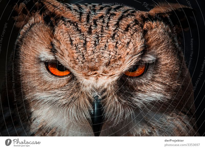 Owl stares at me Vacation & Travel Tourism Trip Adventure Far-off places Freedom Environment Nature Animal Spring Beautiful weather Forest Wild animal Bird 1