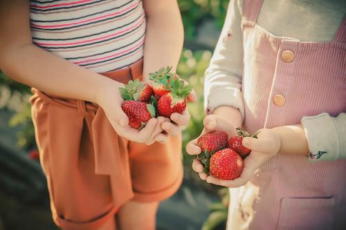 Children hold strawberries in their palms on a strawberry field Fruit Dessert Nutrition Eating Breakfast Diet Joy Happy Summer Garden Human being Hand Fingers