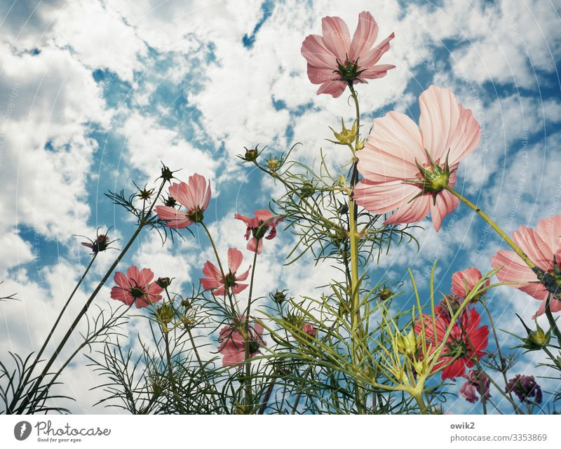 Sky Nature Summer Plant Landscape Flower Clouds Life Environment Blossom Garden Growth Power Idyll Joie de vivre (Vitality) Beautiful weather
