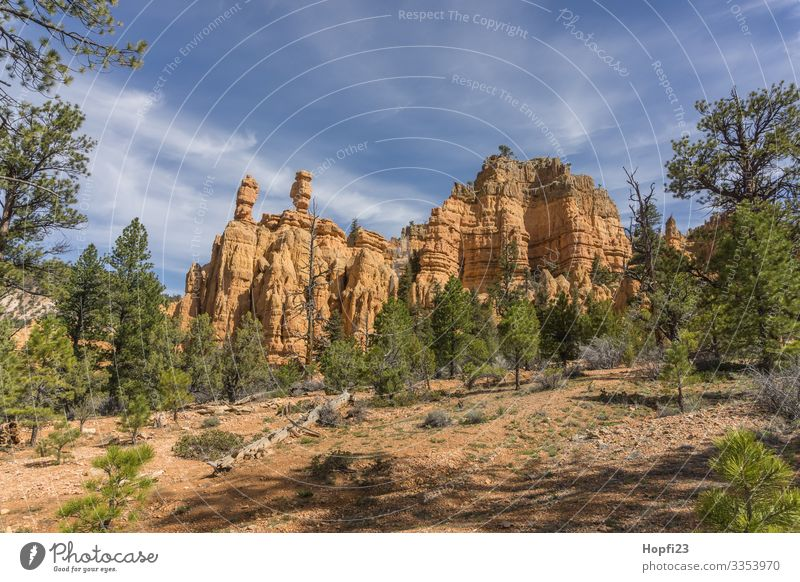 salt and pepper shaker Bryce Canyon Environment Nature Landscape Plant Animal Sky Clouds Sun Spring Beautiful weather Tree Rock Mountain Peak Movement Fitness
