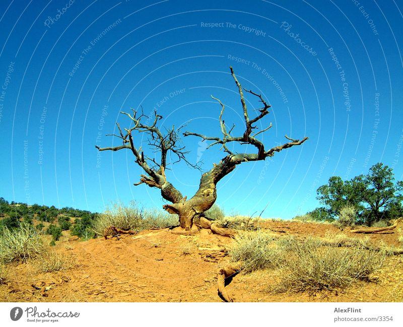 desert tree Tree Dry Desert