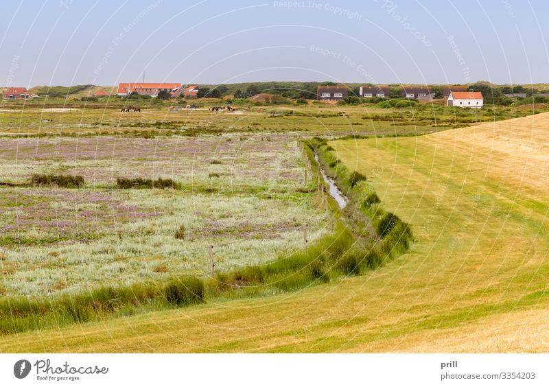 Spiekeroog in East Frisia Summer Island Landscape Plant Bushes Coast Village Authentic East Frisland Friesland district Germany Northern Germany
