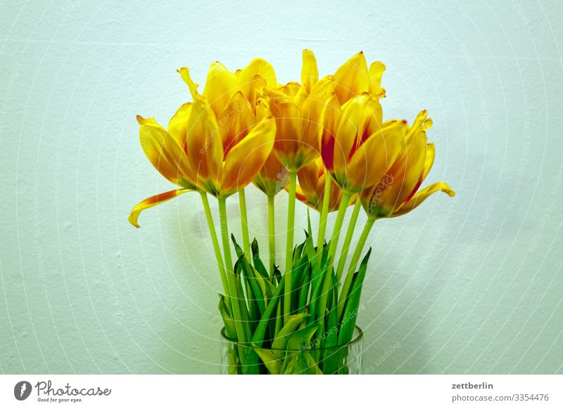 tulips Flower Blossoming Blossom leave Stalk Garden Deserted Nature Plant Calm Copy Space Bouquet Spring Spring flower Spring flowering plant Yellow Gold Orange