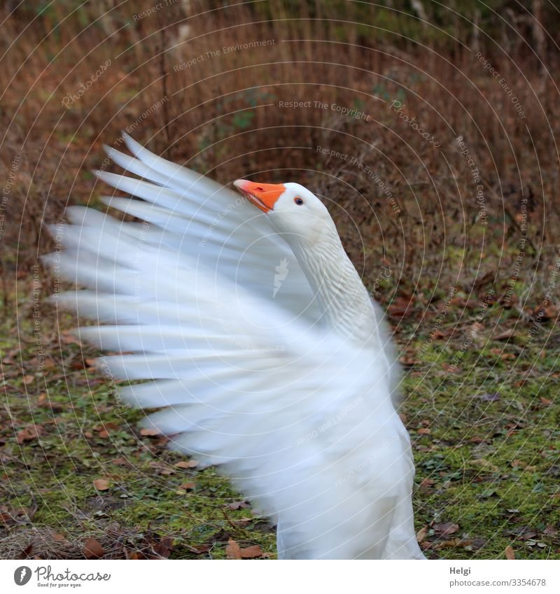 Nature Green White Animal Natural Meadow Movement Exceptional Orange Bird Brown Contentment Stand Feather Uniqueness Wing