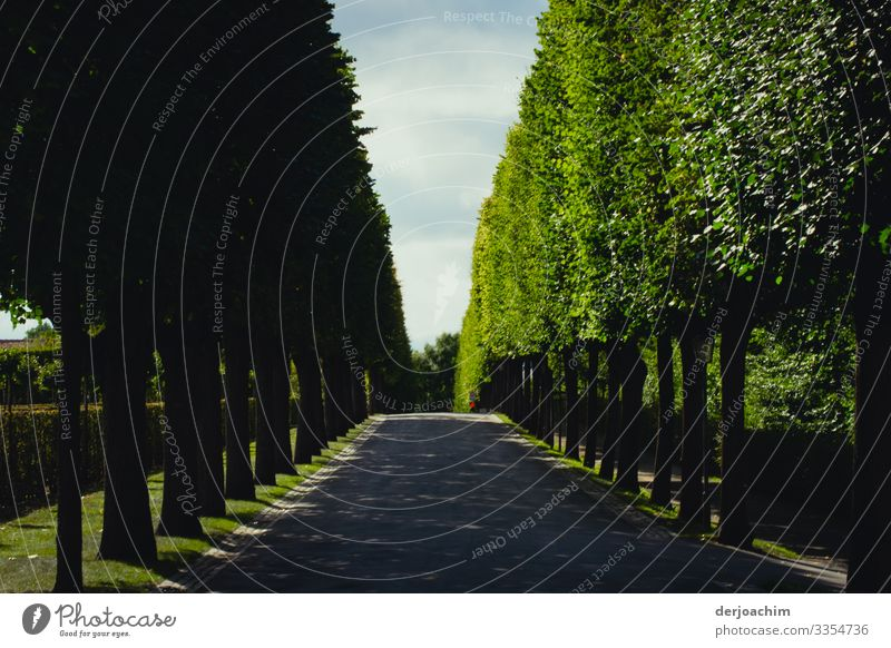 Avenue without end. A beautiful avenue with trees on the left and right. Joy Contentment Bayreuth Bavaria Germany Deserted Stone Wood Observe Discover To enjoy