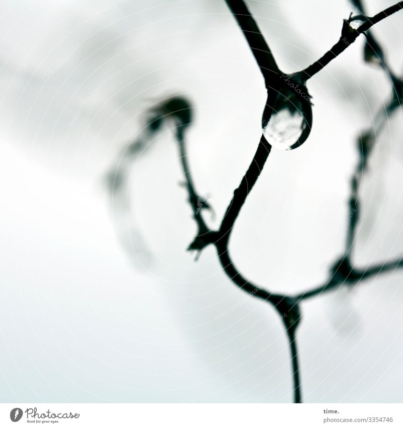 Nature Plant Joy Winter Life Cold Snow Movement Moody Ice Dream Creativity Dance Drops of water Idea Branch