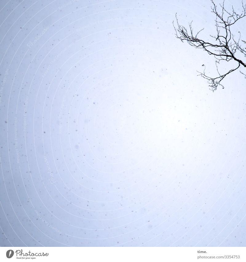 Sky Flakes | Ice Age Environment Winter Beautiful weather Snow Snowfall Branch Tree Snowflake Emotions Moody Joy Joie de vivre (Vitality) Watchfulness Life