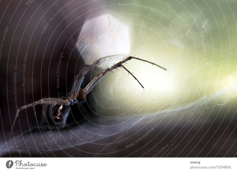 Eugh | Spider Alarm Profile Full-length Animal portrait Central perspective Shallow depth of field Back-light Sunlight Light (Natural Phenomenon) Contrast Day