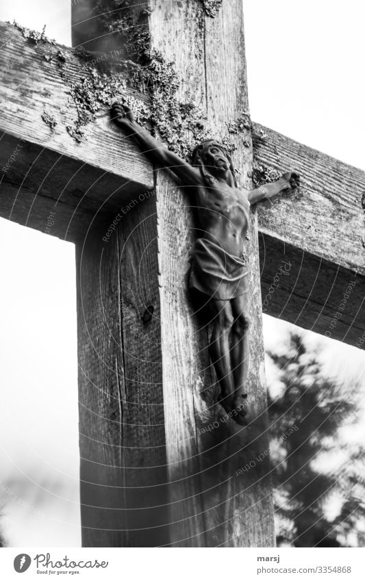 Jesus Crucified Looking away Shallow depth of field Close-up Exterior shot inri Jesus Christ Christian cross Christianity Religion and faith death from sin