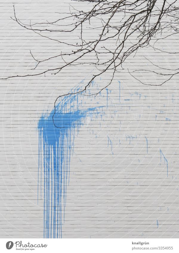 direct hits Winter Plant Tree Town House (Residential Structure) Wall (barrier) Wall (building) color bomb Dirty Blue Brown White Colour Contact