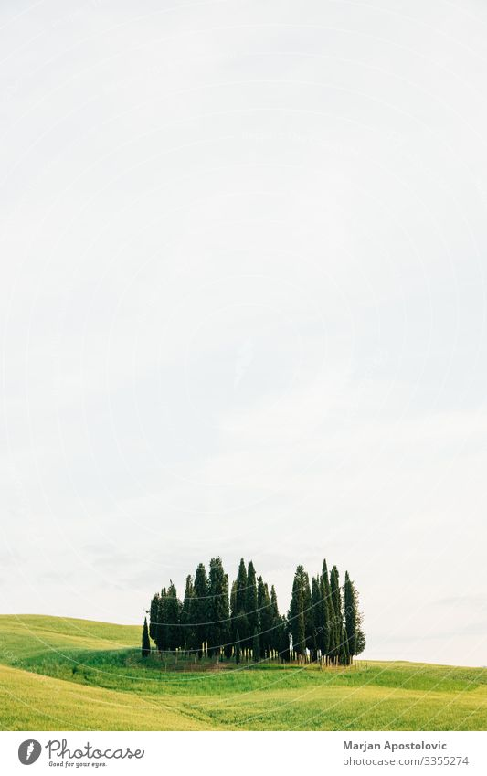 View of cypresses in countryside of Tuscany, Italy Environment Nature Landscape Plant Sky Spring Summer Tree Grass Cypress Meadow Hill Beautiful Natural Green