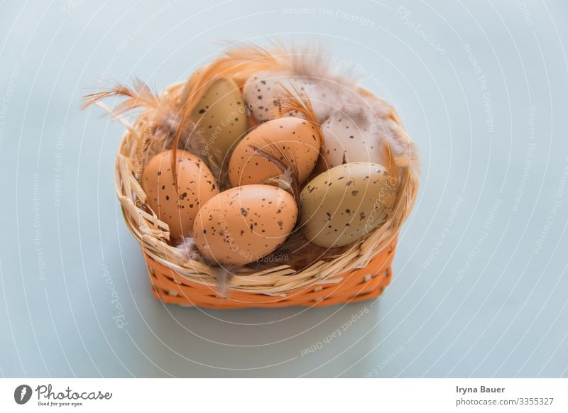 Easter backgruond with eggs and feathers in basket. Lifestyle Harmonious Leisure and hobbies Playing Children's game Garden Eating Nature Animal Tin