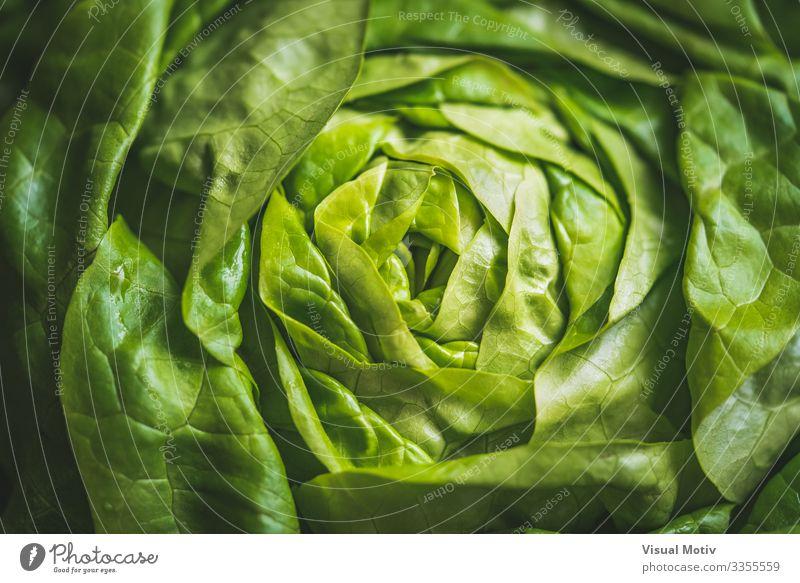 Green leaves of Butterhead lettuce Vegetable Nutrition Organic produce Vegetarian diet Diet Garden Nature Plant Leaf Fresh Natural agriculture boston lettuce