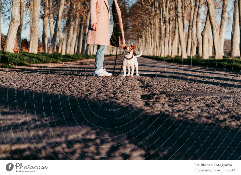 unrecognizable young owner woman and her cute jack russell dog sitting at sunset outdoors Woman Dog Street Sit Jack Russell terrier Pet Youth (Young adults)