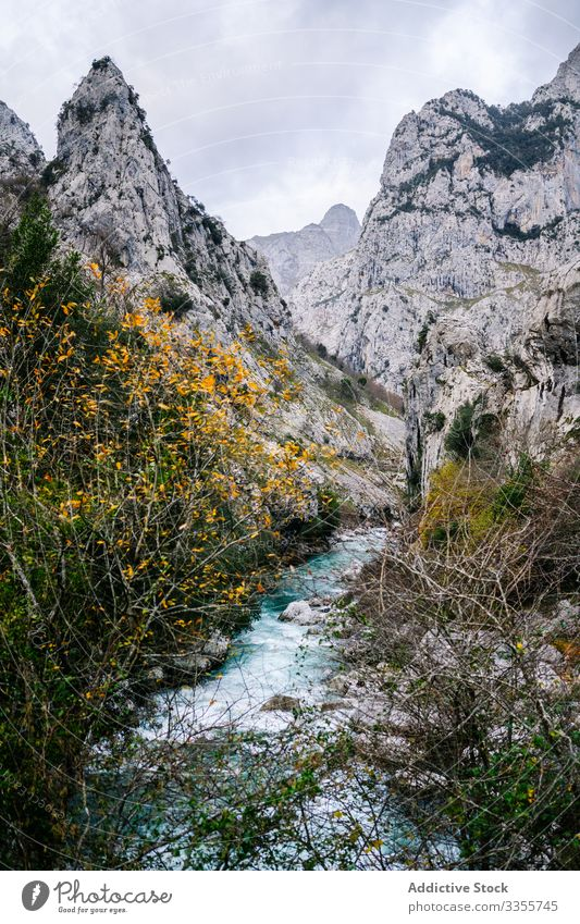 Water stream flowing among rocky peaks in bright day mountain river nature scenic landscape water scenery wilderness adventure hill travel green europe asturias