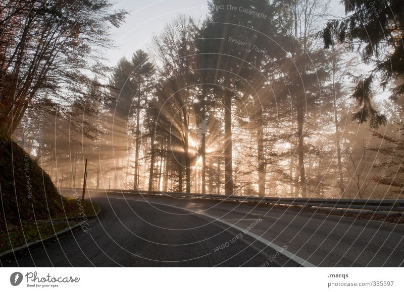 breakthrough Nature Landscape Summer Beautiful weather Forest Transport Traffic infrastructure Street Lanes & trails Curve Driving New Moody Beginning Hope
