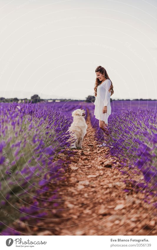 beautiful woman with her golden retriever dog in lavender fields at sunset. Pets outdoors and lifestyle. Meadow Beauty Photography Leisure and hobbies Freedom