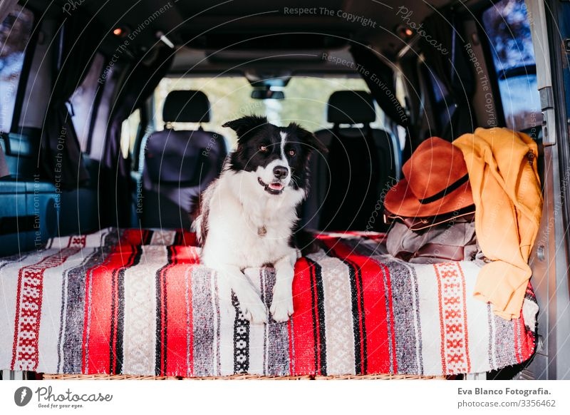 cute border collie dog relaxing in a van. travel concept Dog Friendship Van van life Vacation & Travel Traveling Together Woman Youth (Young adults) Modern