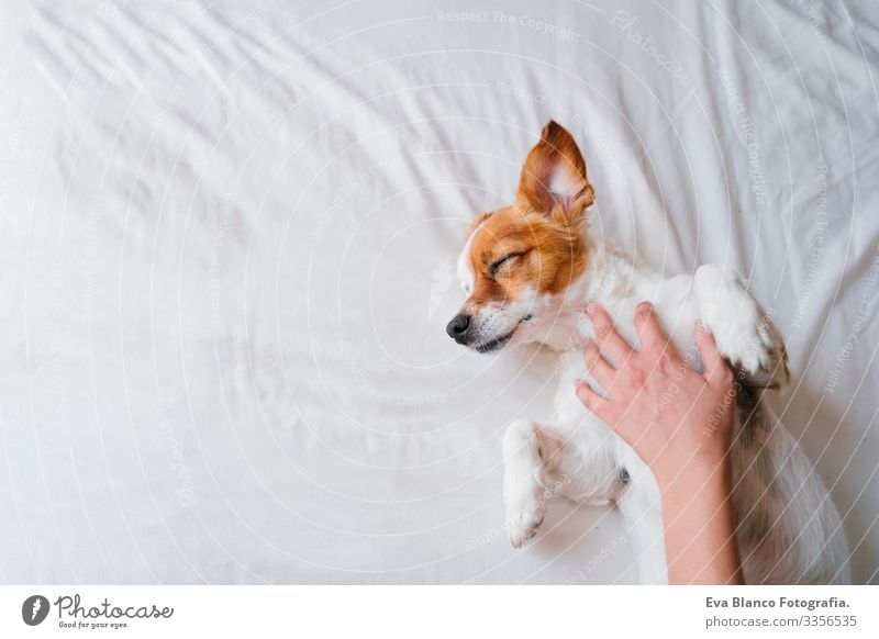 woman making cuddles to her cute small dog sleeping on bed. Love for animals concept. Lifestyle indoors Girl Joy Relaxation Lovely Family & Relations Puppy Cute