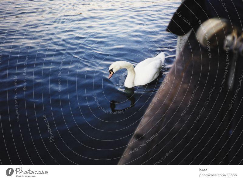 swan Swan Lake Footbridge Footwear Lomography