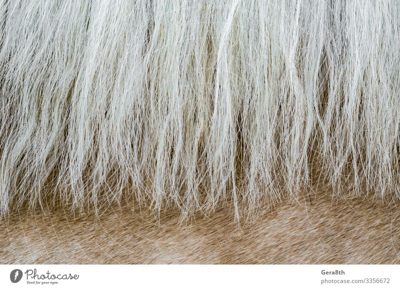 texture of the skin of a beige horse with a mane close up Skin Animal Fur coat Horse Natural White animal skin background Beige Blank detailed fur background