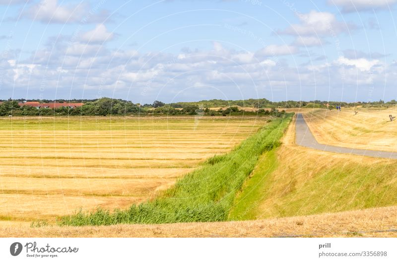 Spiekeroog in East Frisia Summer Island Agriculture Forestry Landscape Meadow Coast Village Street Lanes & trails Authentic East Frisland Friesland district