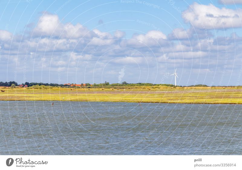 Spiekeroog in East Frisia Summer Ocean Island Landscape Water Coast North Sea Village Authentic East Frisland Friesland district Germany Northern Germany